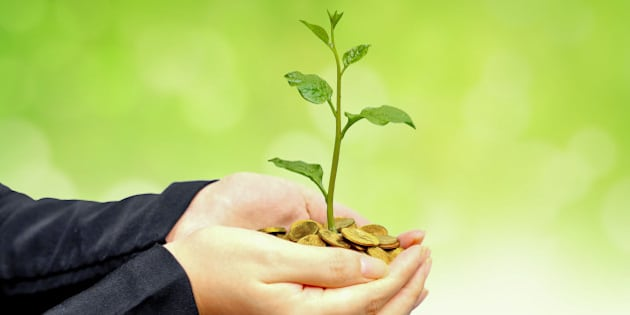 Hands of a businesswoman holding a tree growing on coins with green background - Business growth with csr practice and environmental concern - Business ethics