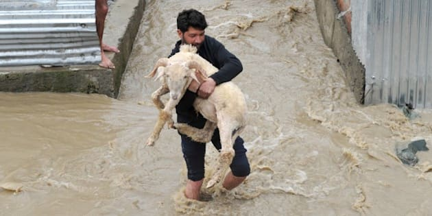 A resident carries a sheep through waters as they rise in a neighbourhood of Srinagar on March 30, 2015.  At least 10 people have been buried by mudslides and hundreds more have had to flee their homes after heavy rain triggered flooding in Indian Kashmir, police said. Mudslides buried at least four houses in Chadoora, the worst hit area of the Himalayan region where hundreds were killed in devastating floods last September.  AFP PHOTO/Rouf BHAT        (Photo credit should read ROUF BHAT/AFP/Getty Images)