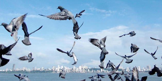 BOMBAY, INDIA:  Pigeons take flight into the blue sky along Marine Drive with the city skyline as a backdrop on an extremely clear day in Bombay, 10 October 2004. India's financial and entertainment capital with it's rising population of some fifteen million is faced with some of the countries highest pollution levels and the advent of a clear day is a rarity for the citizens to enjoy.   AFP PHOTO/Rob ELLIOTT  (Photo credit should read ROB ELLIOTT/AFP/Getty Images)