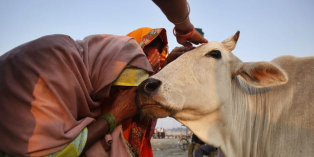 Image result for COW INDIA