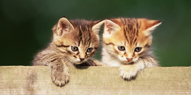 13 motivi per cui essere padroni di un gatto è una cosa meravigliosa (FOTO)