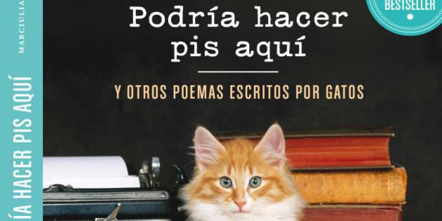 'Podría hacer pis aquí': cuando los gatos se convierten en poetas (GIFS)