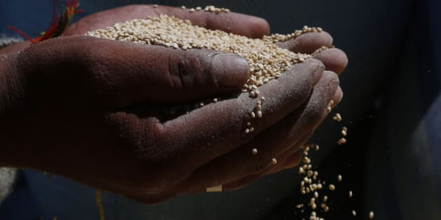 "In this Nov. 7, 2014 photo, a man holds Peruvian quinoa, part of 23 metric tons to be burned in Guaqui, Bolivia. International demand for quinoa continues to boom, and that's fueling an increasingly bitter commercial feud between Bolivia and Peru, the two main producers of the Andean ""superfood."" As Peru boosts production of cheaper factory-farmed quinoa, the grain is increasingly being smuggled into landlocked Bolivia to be mixed with, and sometimes sold as, organic quinoa _ Bolivia's specialty, growers and government officials say. (AP Photo/Juan Karita)"
