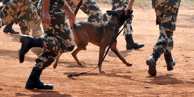 A Belgian Shepherd Dog (Malinois) runs with its handler amongst Central Police Reserve Force (CRPF) commandos during a display of the dog's agility part of the inauguration of CRPF's Dog breeding and training school on the outskirts of Bangalore on December 5, 2011. These highly trained combat ready dogs are capable of taking remote orders from its handler over wired communication set, and carry out an attack, bite and disarm a terrorist besides sniffing narcotics and explosives. AFP PHOTO/Manjunath KIRAN (Photo credit should read Manjunath Kiran/AFP/Getty Images)