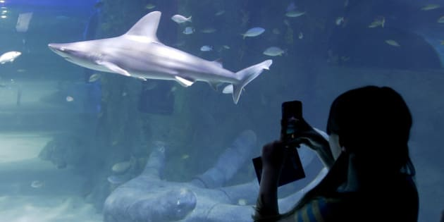 In this April 27, 2015 photo, a visitor takes a photo of the shark tank at the new Sea Life Aquarium in Orlando, Fla. The aquarium has touch pools, a wall of trippy floating jellyfish and plenty of sharks to spy. A dark, submarine-inspired thrill ride in California and swank new offerings at Downtown Disney all top the summer's must-do list for theme park and amusement fans. (AP Photo/John Raoux)