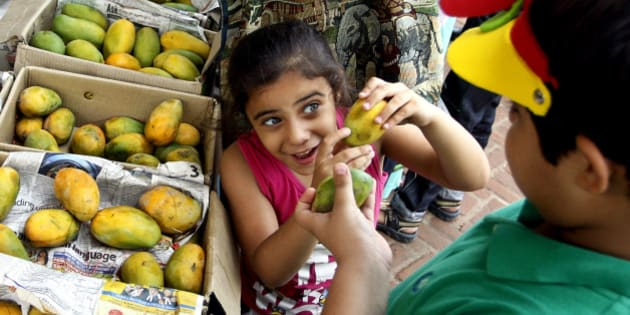 An Indian girl shows a mango to her brother at the annual mango festival in New Delhi, India, Saturday, July 7, 2012. India recognizes mango as its national fruit and is the world's largest mango producer with about 13 million tons each year, far exceeding all other countries. (AP Photo/Tsering Topgyal)