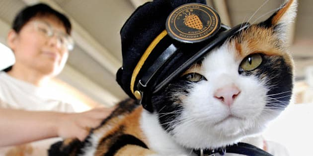 A woman strokes 'Tama', a nine-year-old female tortoiseshell cat wearing a stationmaster's cap of the Wakayama Electric Railway, as the feline sits on a ticket gate at Kishi station on the Kishigawa line in the city of Kinokawa, in Wakayama prefecture on May 22, 2008. The number of passengers who travel along the line increased 10 percent for the year to March 2007 from the previous year, credited to Tama after the 'stationmaster' cat appeared at the unmanned small station.   AFP PHOTO/Toru YAMANAKA (Photo credit should read TORU YAMANAKA/AFP/Getty Images)