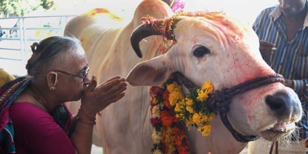 Afbeeldingsresultaat voor hindu cow