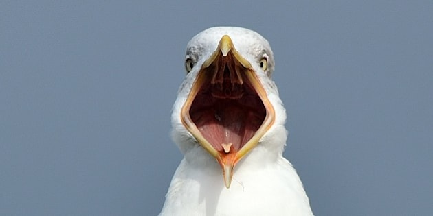 I send you a picture of a seagull with his mouth open all. Hope you like.