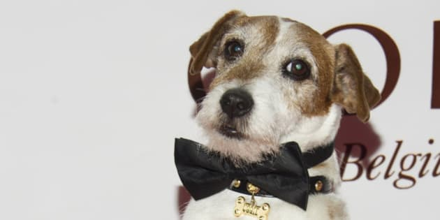 Uggie the dog from the film 'The Artist' poses on the red carpet for the Friars Club Roast of Betty White in New York, Wednesday, May 16, 2012. (AP Photo/Charles Sykes)