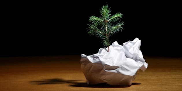 Tree Emerging from Crumpled Paper
