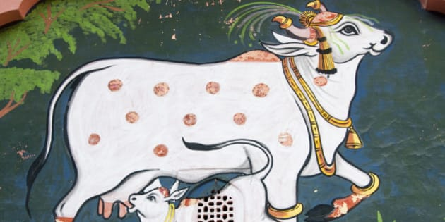 On the wall of a temple, a cheerful scene, with a decorated cow and her baby calf sucking milk.