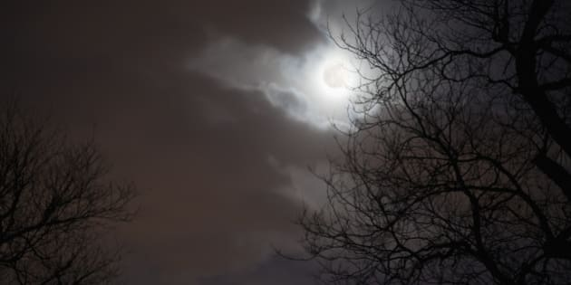 Night Sky with Moon, Clouds and Trees