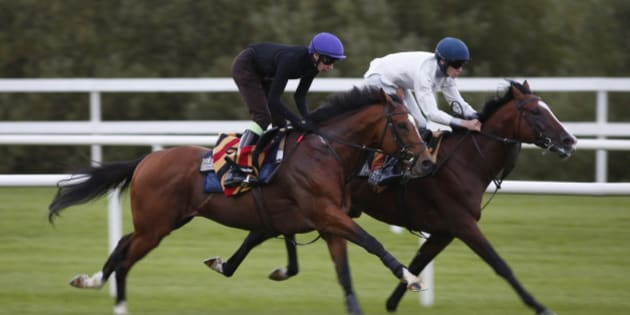 DUBLIN, IRELAND - SEPTEMBER 12: Joseph O'Brien riding Gleneagles (L) gallop after racing at Leopardstown racecourse on September 12, 2015 in Dublin, Ireland. (Photo by Alan Crowhurst/Getty Images)