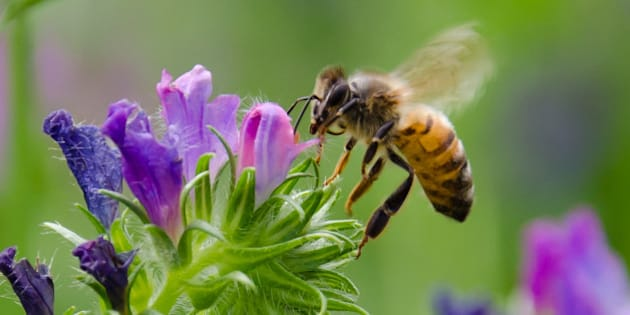 I had fun trying to capture some bees in flight. Considering that I used the kit lens, I am reasonably satisfied :)