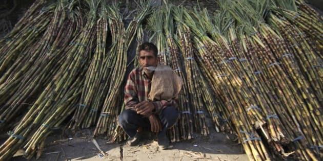 A sugarcane farmer waits for buyers at a roadside wholesale market in Jammu, India, Saturday, April 6, 2013. India has decided to lift curbs on its $15.5 billion sugar industry that restricted sales of sugar on the open market and required mills to sell sugar to the government at a deep discount. (AP Photo/Channi Anand)