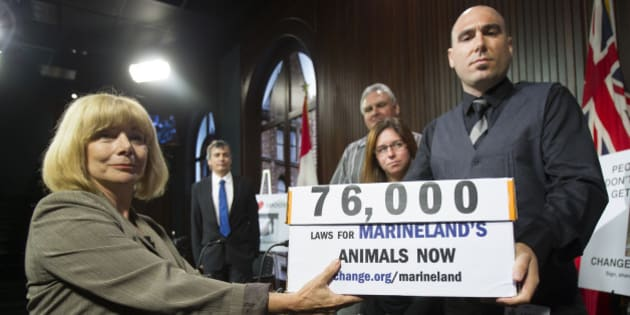 TORONTO, ON - SEPTEMBER 17: MPP Cheri DiNovo accepted boxes of petitions from Philip Demers,  former Marineland senior marine animal trainer (far right), as Rob Laidlaw, director of Zoocheck;  Jim Hammond, land animal care supervisor and Angela Bentivegna, marine mammal trainer look on. Petitions by more than 76,000 people were brought to Queen's Park by former staff of Marineland.        (Bernard Weil/Toronto Star via Getty Images)