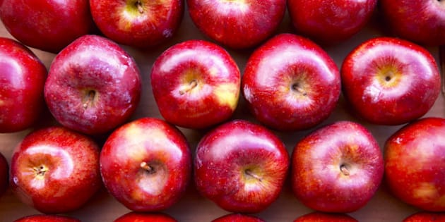 Rows of apples