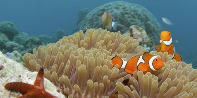 13 Fun Facts You Didn't Know About The Great Barrier Reef