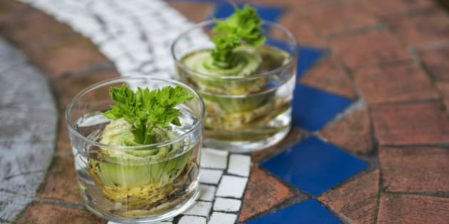 How to regrow celery from leftovers at home