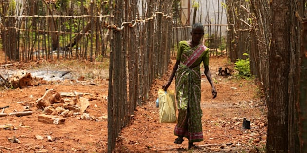 JAFFNA, SRI LANKA - AUGUST 12:  A Newly resettle minority ethnic Tamil woman walks between the fences in the land which has been recently released back to owners in April after 25 years as a military forces high security zone in the remote village of Thillipali on August 12,2015 in Jaffna, Sri Lanka. The UN's Human Rights Council investigation into alleged war crimes committed by both the Sri Lankan Government and the Liberation Tigers of Tamil Eelam (LTTE) during the Sri Lankan Civil War is due to be released in September.  (Photo by Buddhika Weerasinghe/Getty Images)