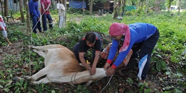 Thai Muslim villagers slaughter a cow during the Eid al-Adha festival in Thailand's southern province of Narathiwat on September 26, 2015.  Muslims across the world celebrate the annual festival of Eid al-Adha, or the Festival of Sacrifice, which marks the end of the Hajj pilgrimage to Mecca and in commemoration of Prophet Abraham's readiness to sacrifice his son to show obedience to God.   AFP PHOTO / Madaree TOHLALA        (Photo credit should read MADAREE TOHLALA/AFP/Getty Images)