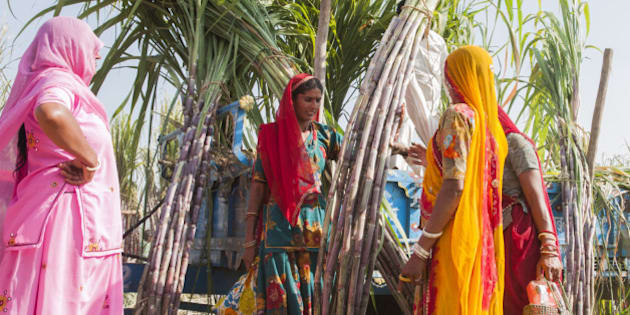 Woman buying Sugar Cane at the Pushkar Camel Fair