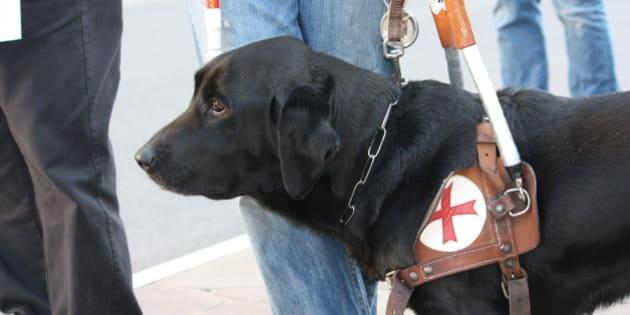 Artù, il cane guida di Laura Raffaeli