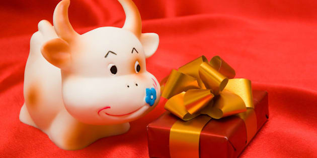 cow and gift