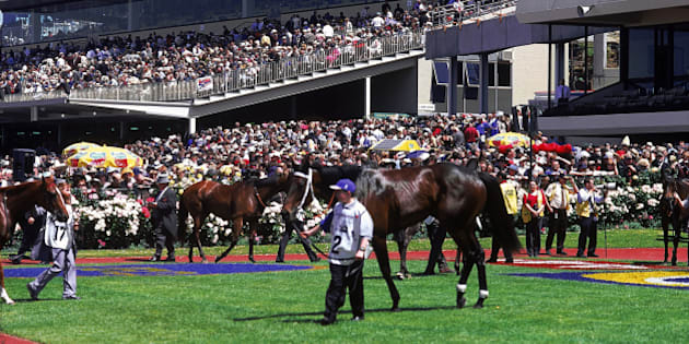 Horses in mounting yard, Hill Stand in b/g, Melbourne Cup Carnival, Melbourne, Victoria, Australia