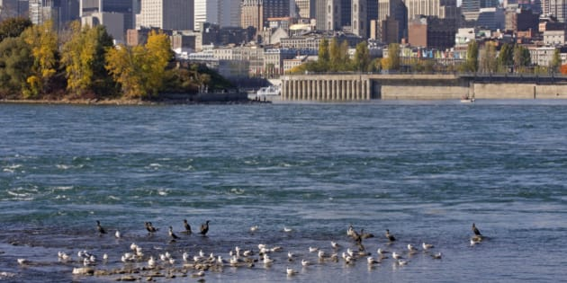 Montreal skyline and Saint Lawrence River in autumn