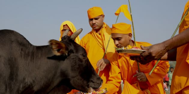 In this Friday, Oct. 9, 2015 photo, Hindu devotees feed a cow after performing Pind Daan rituals, believed to bring peace to the souls of ancestors, on the banks of the River Ganges, in Allahabad, India. Cows have long been sacred to Hindus, worshipped as a mother figure and associated since ancient times with the god Krishna. But increasingly, cows are also becoming a tool of political parties, an electioneering code word and a rallying cry for both Hindu nationalists and their opponents. (AP Photo/Rajesh Kumar Singh)