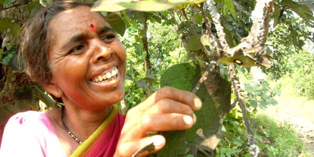 Published in LEISA Magazine, March 2009, vol. 25 no 1: Farming diversity.This farmer is cultivating <i>lac</i> trees.