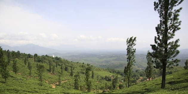 (GERMANY OUT) India - Wayanad: tea estate in the Nilgiri Hills (Photo by Forster/ullstein bild via Getty Images)