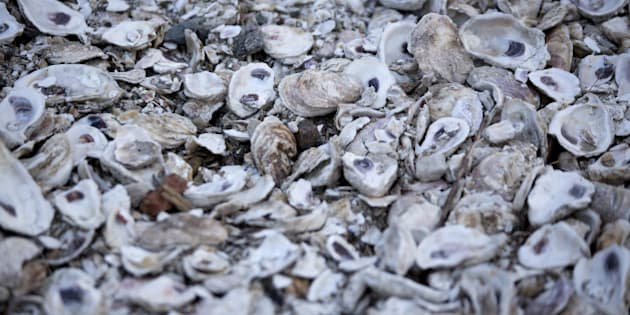 Oyster shells sit in a pile after being shucked at W.E. Kellum Seafood Inc. in Weems, Virginia, U.S., on Wednesday, Oct. 29, 2014. In July, Governor Terry McAuliffe stated 'Virginia has become the oyster capital of the East Coast' with the oyster harvest in Virginia increasing from 23,000 bushels in 2001 to over 500,000 bushels in 2013. Photographer: Andrew Harrer/Bloomberg via Getty Images