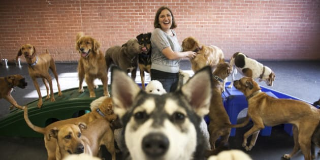 In this photo taken Friday, Dec. 7, 2012, Andrea Servadio, founder and owner of  Fitdog, poses for a photo at her doggy daycare in Santa Monica, Calif. Last year, more than half of the 13 dog handlers at Fitdog Sports Club unexpectedly quit. Like many small business owners who face problems with employee retention, Servadio knew she needed to make changes so that Fitdog employees would want to work there for a longer stretch. (AP Photo/Damian Dovarganes)