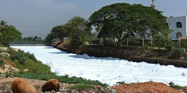 A canal which once carried water from Bellandur Lake to Varthur Lake is filled with froth emanating from sewage in east Bangalore on May 1, 2015. The innocuous-looking foam, which from a distance, looks like snow is nothing but toxic effluent caused by the polluted sewage water overflowing from nearby Bellandur Lake. The foam is a result of the water in the lake having high content of ammonia and phosphate and very low dissolved oxygen. Sewage from many parts of the Bangalore is released into lakes, leaving it extremely polluted. The foam during heavy rains spill onto the road, causing a traffic pile besides spreading unbearable stench in the air in the neighbourhood. AFP PHOTO/Manjunath KIRAN        (Photo credit should read MANJUNATH KIRAN/AFP/Getty Images)