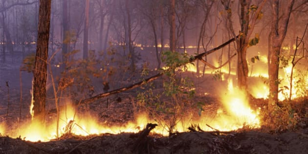 Forest Fire, kakadu National Park, Northern Territory, Australia