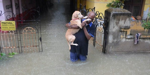 An Indian man carries his dog on a flooded street following heavy rain in Chennai on November 16, 2015.  Large areas of the southern Indian city of Chennai have been flooded following days of heavy rain. AFP PHOTO        (Photo credit should read STR/AFP/Getty Images)