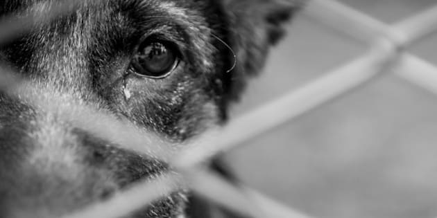 A dog alone and abandoned behind a fence.