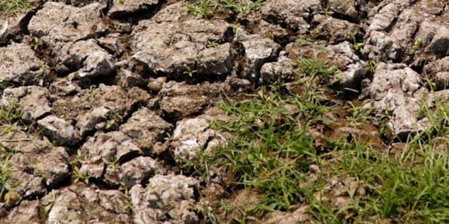 Cracks appear in a rice field, dried up due to no rain. In most of the areas rain is the main source of water for agriculture in India.