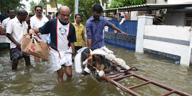 Indian flood-affected people move an injured dog in rain-hit areas on the outskirts of Chennai on November 17, 2015.   India has deployed the army and air force to rescue flood-hit residents in the southern state of Tamil Nadu, where at least 71 people have died in around a week of torrential rains.  AFP PHOTO        (Photo credit should read STR/AFP/Getty Images)