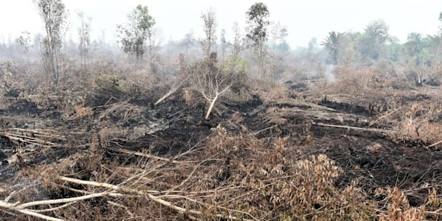 A general view shows fire damaged forest and peatlands, surrounding Palangkaraya city, in Central Kalimantan on October 30, 2015. Desperate civilians at the epicentre of Indonesia's haze crisis are taking the fight into their own hands, using whatever meagre resources they have to confront the fires ravaging their communities as they tire of waiting for the government to take action. AFP PHOTO / Bay ISMOYO        (Photo credit should read BAY ISMOYO/AFP/Getty Images)