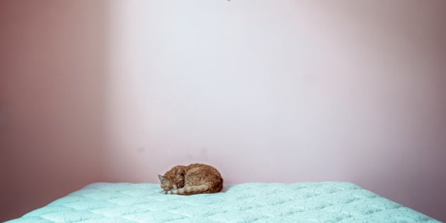 A ginger cat sleeps curled up into a small ball on a big, empty, unmade bed.