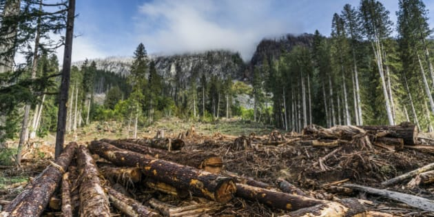 Squamish, British Colombia, Canada - August 11, 2014.  High altitude logging clearing with forest-fire burned mountain top in background.