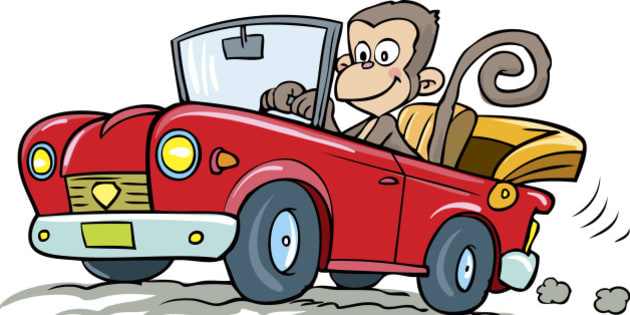 Illustration of monkey driving car.