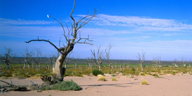 Dead trees in empty Menindee Lakes, New South Wales, Australia