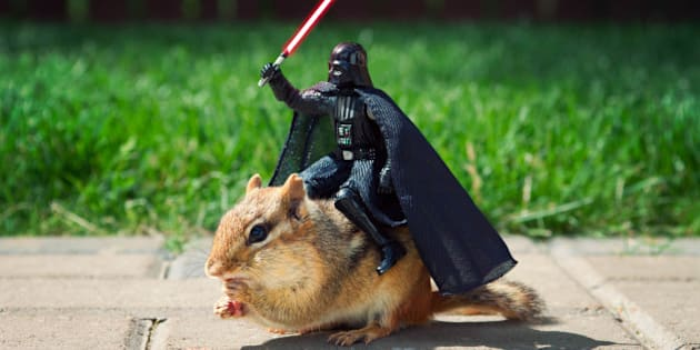 BATHURST, CANADA - JUNE 16: *** EXCLUSIVE *** In this illustration,Sith Beast. Unable to get his starship repaired, Darth Vader finds new transportation on June 16, 2010 in Bathurst, Canada. Canadian Chris McVeigh has captured stunning new images of wild chipmunks in hilarious situations with action figures from the Star Wars saga. The all-new captivating series improves on Chris's previous attempts with the small rodents and camera, which were seen by millions round the world. It has been a four-year journey of patience for illustrator Chris, 37, as he has prepared each shoot with the bushy-tailed chisellers he has befriended in his parents Michael and Frances' back yard in Bathurst, New Brunswick. The determined snapper has been able to convince the chipmunks to pose with a mix of perseverance and almonds - a favourite of chipmunks because of their high fat content and large size. (Illustration by Chris McVeigh / Barcroft Media / Getty Images)