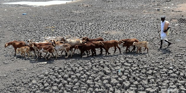 An Indian farmer herds his sheep on the dry bed of a river at Bibi Nagar in Nalgonda District, some 40 kilometers from Hyderabad on March 23, 2015.  AFP PHOTO/ Noah SEELAM        (Photo credit should read NOAH SEELAM/AFP/Getty Images)