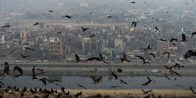 Birds fly through a cloud of pollution which envelops aresidential area near the Anand Vihar District of New Delhi on January 8, 2016. AFP PHOTO / CHANDAN KHANNA / AFP / Chandan Khanna        (Photo credit should read CHANDAN KHANNA/AFP/Getty Images)